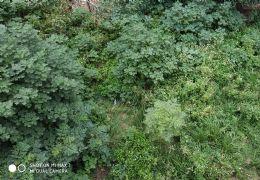 江边别墅区 联排边套 带独家使用大花园 超大地下室